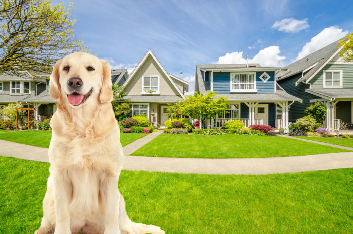 Transgender Dog Confused Which Lawn It Can Poop On