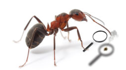 STUDY: Ants Spend Days Burning Shit With Magnifying Glass