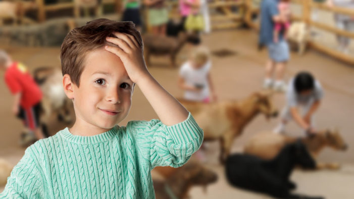 5-Year-Old Can't Make Up His God Damn Mind About Which Goat to Pet